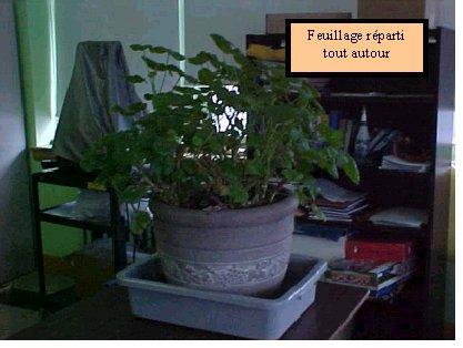 Affiche article scientic - Table plante ...